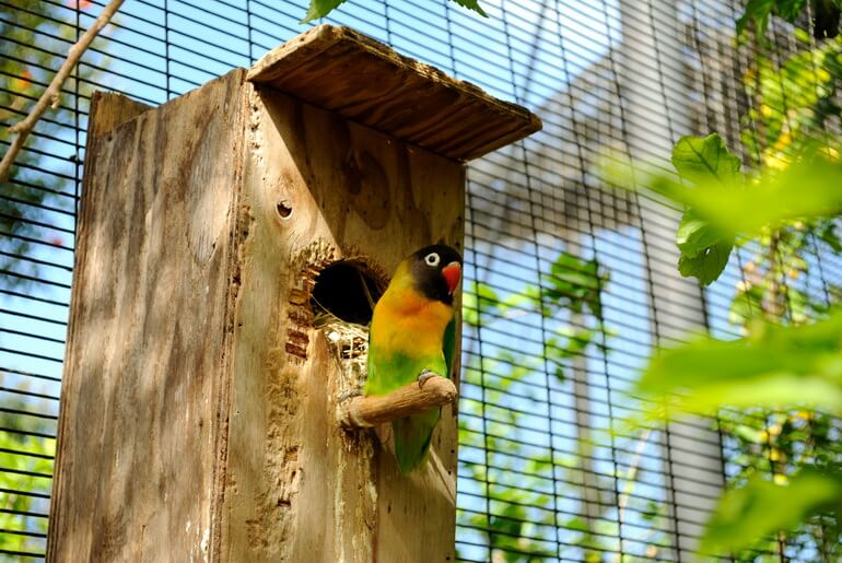 Гнездо для неразлучников