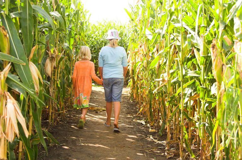 Лабиринт из кукурузы