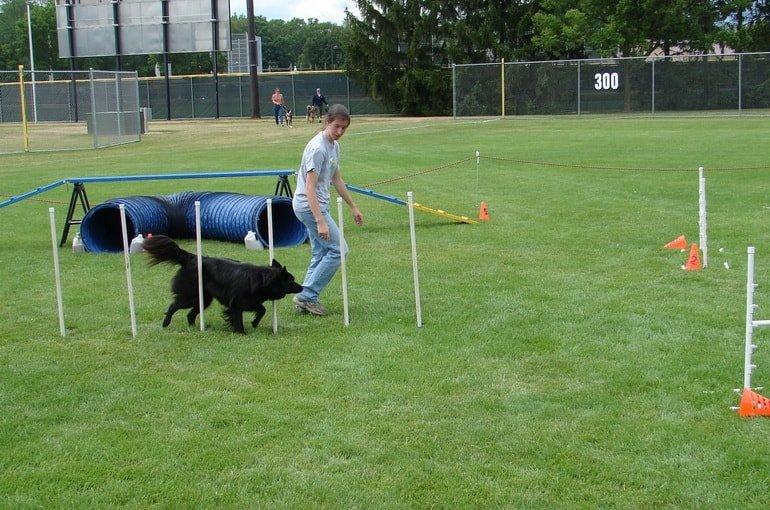 Организация парка отдыха для собак