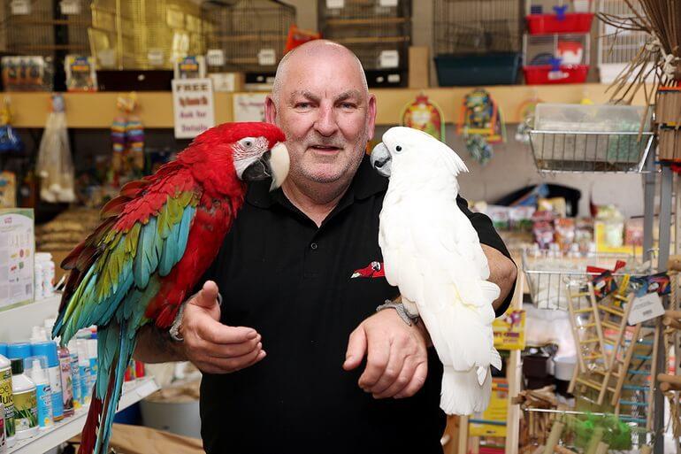 Продажа попугаев в зоомагазине