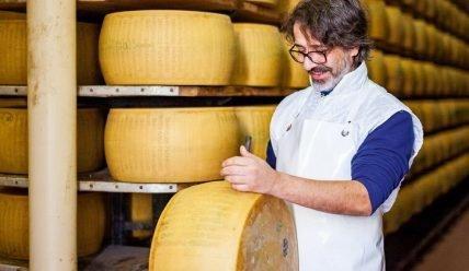 Производство сыра как бизнес: обзор, плюсы и минусы