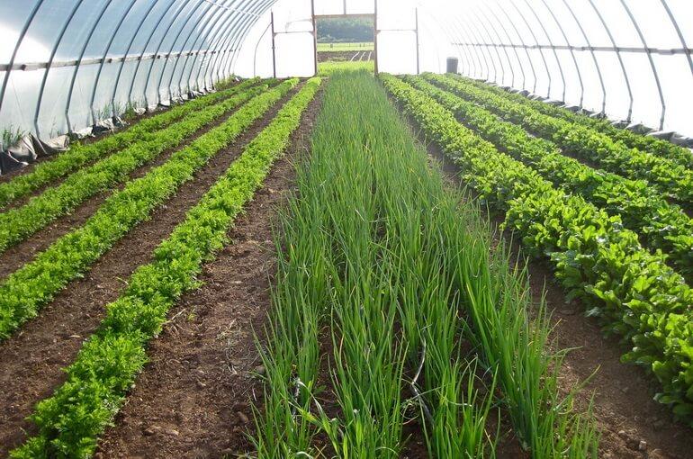 Выращивание зелени в деревни как бизнес
